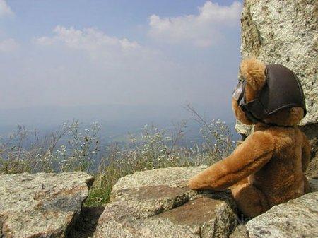 В Чехии открылось турагентство для плюшевых медведей