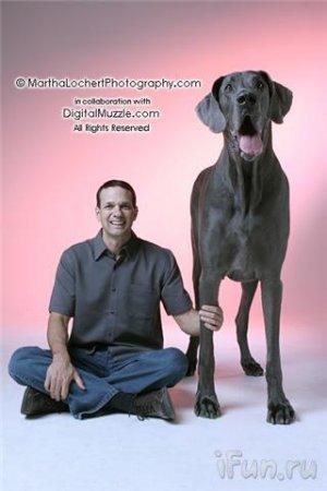 Огромный пёс