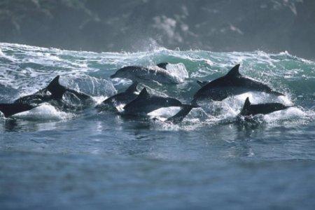 Танцы дельфинов