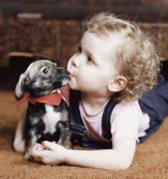 Собака и аллергия