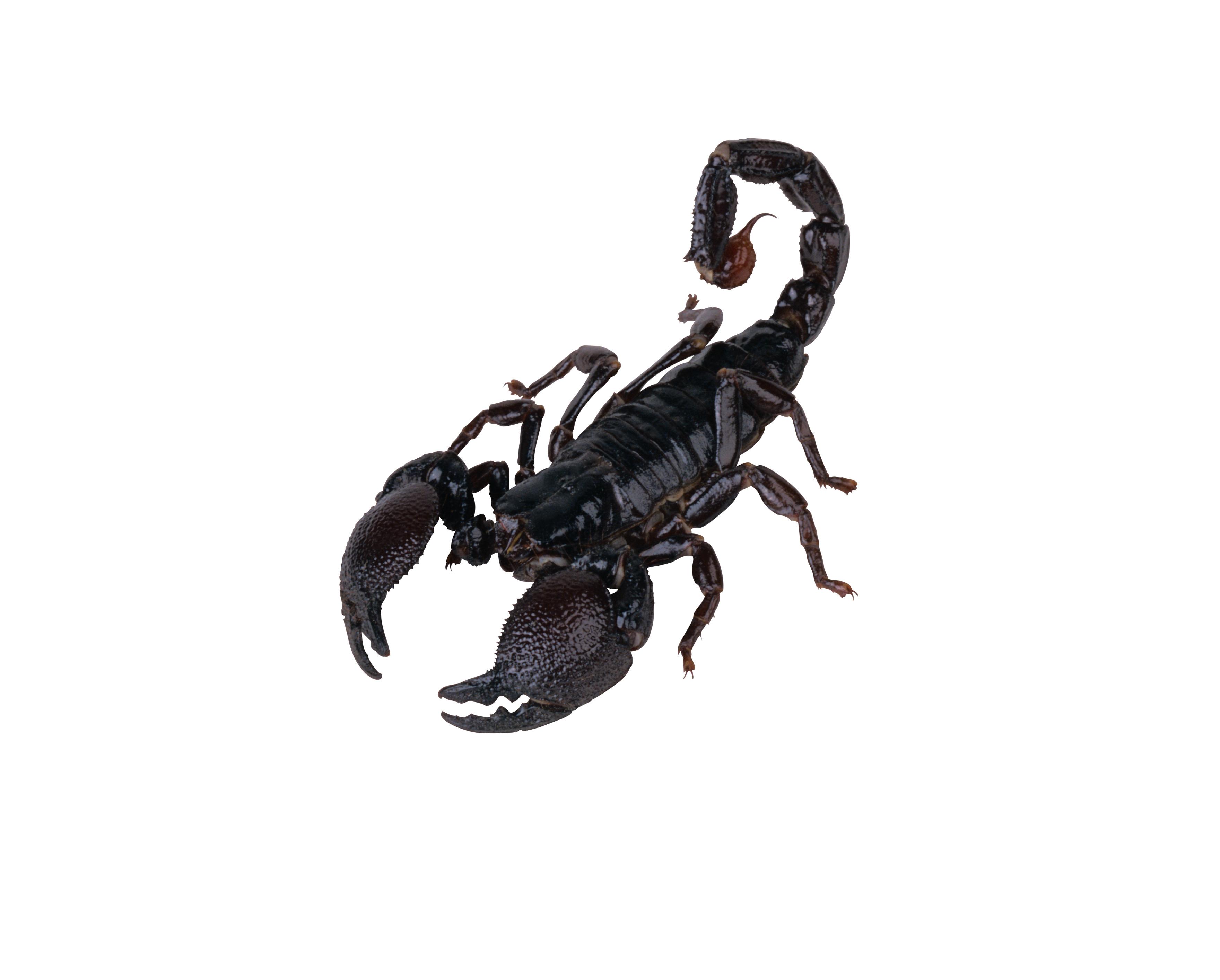 Днем, скорпионы картинки для детей