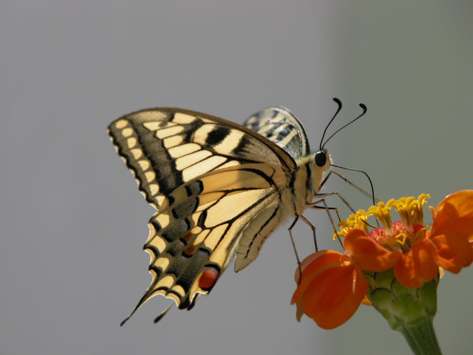 Картинка лапки бабочки