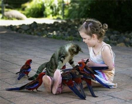 Милые и забавные зверушки