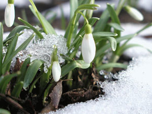 Через два дня в Беларусь придет весна