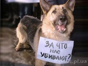 В Беларуси живодеров судят редко