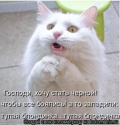 Котоматрицы-23