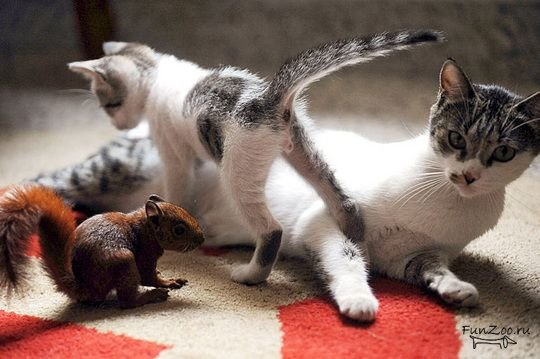 Бельчонок в семье котэ