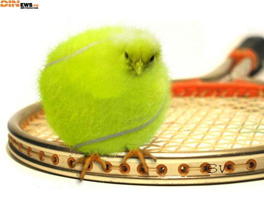 Мирный и Азаренко ухудшили свои позиции в теннисных рейтингах