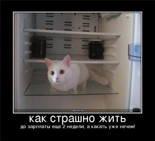 КотЭ-Микс