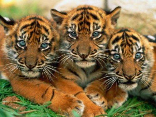 Маленькие детки больших котэ