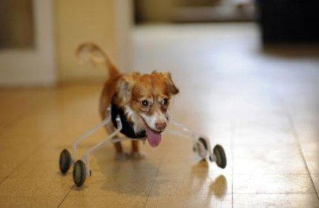 Собачка на колесиках