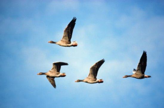 Птички. Часть 1