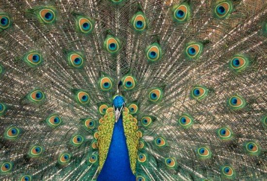Птички. Часть 2
