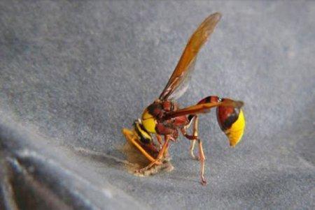 Домик для осы