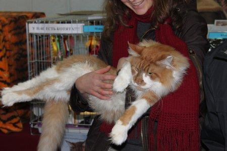 В Минске прошла выставка кошек (фото)