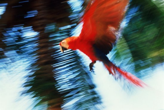 Птички. Часть 4