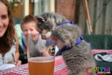 Пивные коты