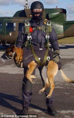 Собаки - парашютисты