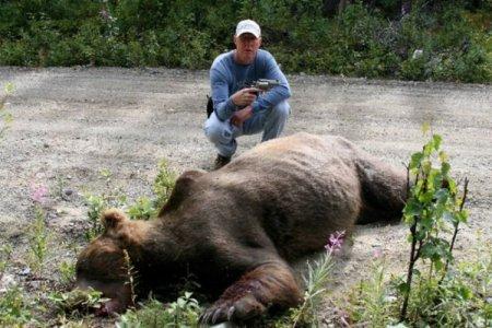 Маленький пистолет против большого медведя
