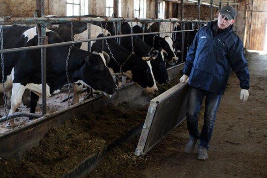 Телевидение для коров