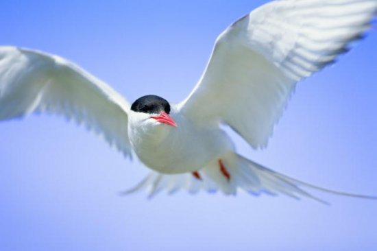 Птички. Часть 5