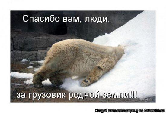 Котоматрицы-24
