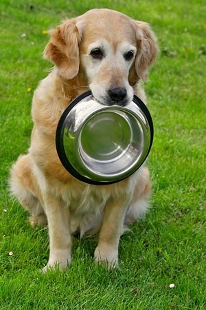 Собака одного ювелира из Нью-Йорка объела хозяина на $20 тысяч