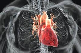 """Сердечное меню: что полезно и вредно для сосудов и """"мотора"""""""