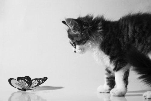 Бабочки и животные