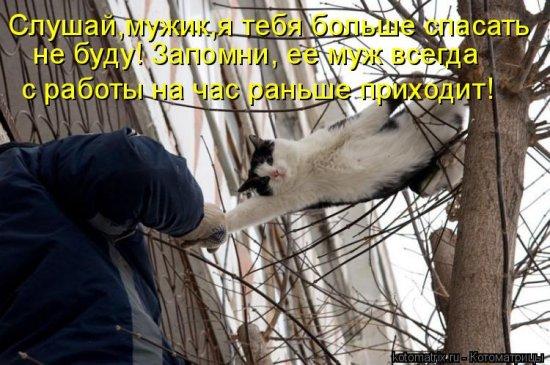 Котоматрицы-26