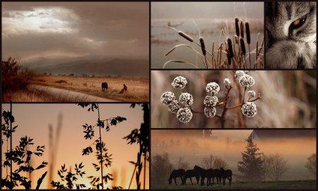Коллажи от Далайлапы