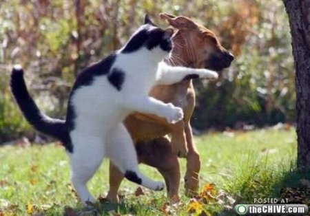 Как кошка с собакой