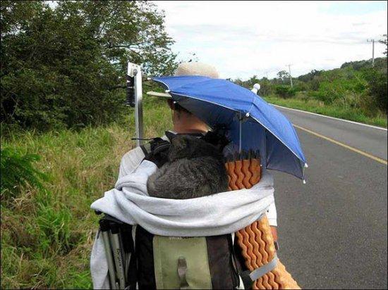 Котэ путешествующий