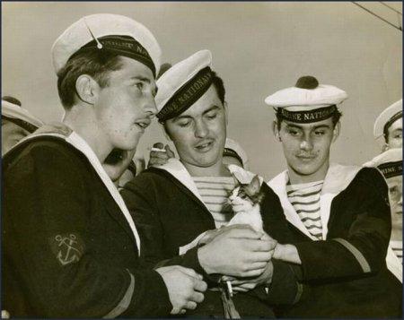 Морские котики