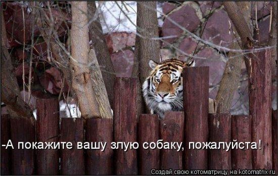 Котоматрицы-28