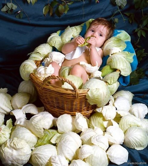 О пользе капусты
