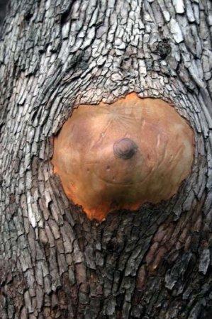 Сексуальные деревья