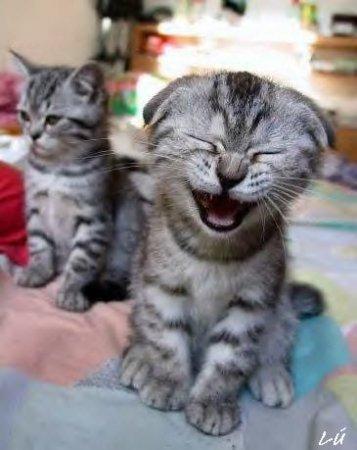 Смейтесь – это полезно
