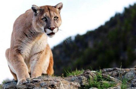 Фотографии животных призера многих фотоконкурсов Lennette Newell