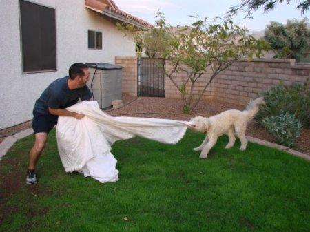 Месть свадебному платью