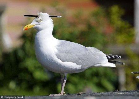 Жаль птицу