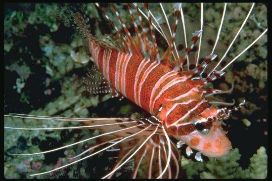 Морская природа (фото)