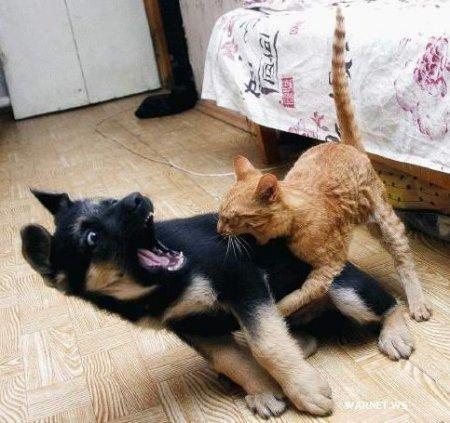 Коты vs собаки