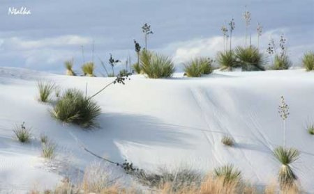 В самой сухой пустыне мира выпал снег