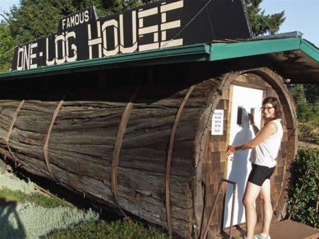 Дом в стволе гигантского дерева