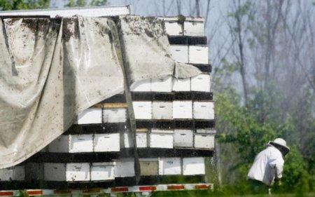 В США в ДТП попал трейлер перевозивший около 7 тысяч пчелиных ульев