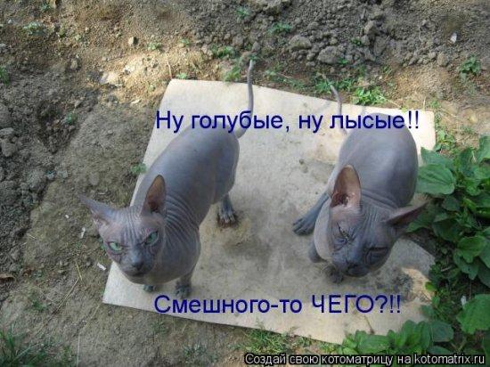 Котоматрицы-31