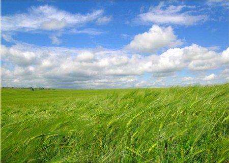 В 2010 году Heineken в Беларуси будет выращивать ячмень в Гомельской области
