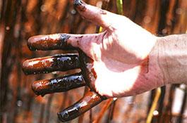 На трубу, из которой в Мексиканский залив вытекает нефть, поставили заглушку