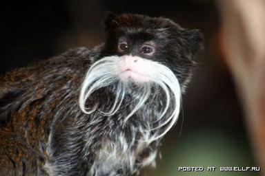 24 необычных живых создания